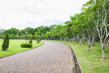 Road brick curve greenery plumeria garden