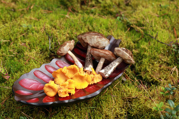 chanterelles and boletus on a wooden platter in the forest