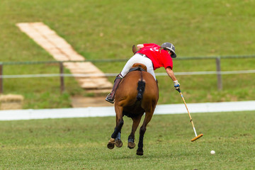 Polo Player Horse equestrian closeup abstract game action