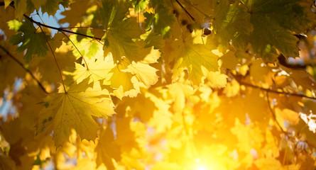 Herbstlaub im Sonnenlicht