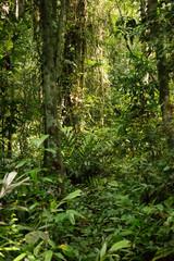 Heart of Africa tropical rainforest, Congo.