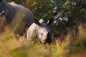 A baby rhino