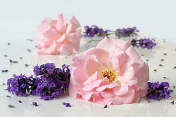 Pink garden roses and lavender flowers. Floral decoration.