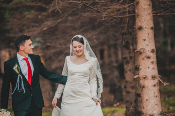 young family, the wedding, the newlyweds. Bride and groom walk around the trees in an autumn forest