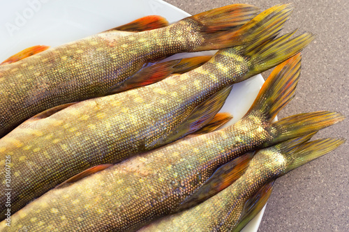 Pike tails lying on a plate freshwater fish fresh pike for Predatory freshwater fish