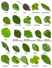 set of green leaves of trees and shrubs with names