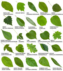 green leaves of trees and shrubs with names