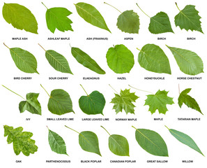 collection of green leaves of trees with names