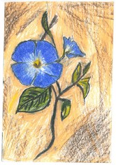 Blue flower, pastel drawing / Beautiful blue flower painted, pastel on a mixed background, brown, milky ...