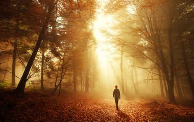 Spaziergang im Wald bei atemberaubender Lichtstimmung im Nebel Fototapete