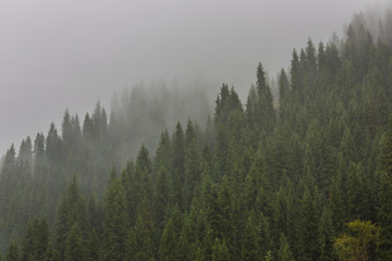 Fog in the mountains, pine trees in the mountains, the background wallpaper, summer, autumn