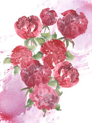 peony watercolor illustration