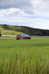 An old barn in the field on a summer evening. Image taken in Finland.
