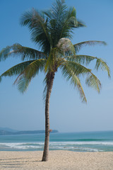Single palm tree on a tropical beach over sea and sky background in summer day