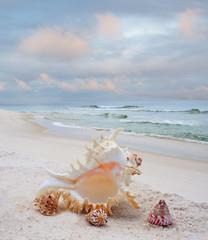 Shells on a White Sand Beach