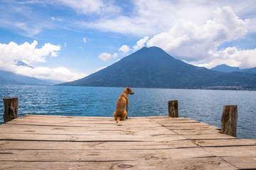 Dog in a wooden pier looking to horizon at Atitlan Lake with San