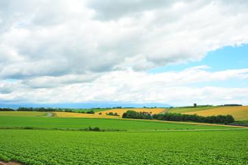 Green Plantation Fields in Biei, Hokkaido, Japan