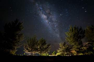 Milky way Galaxy rise above trees. Image may contain soft focus, blur and noise due to High Iso, wide Aperture and Long exposure.