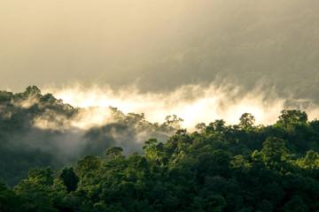 Morning Mist at Tropical Mountain Range ,chiangmai Thailand