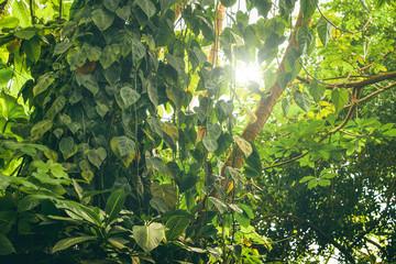 Rainforest with green vegetation