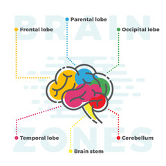 Brain Zones Scheme. Colorful Infographics of Different Lobes in Line and Flat Style.