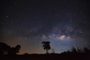 milky way and silhouette of tree. Long exposure photograph.with