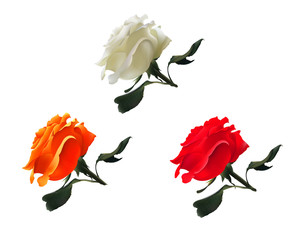 Vector Realistic Set of Roses : White,Red,Orange. Isolated on White background