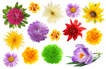 Collage of beautiful flowers on white background.