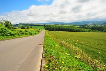 Rural Road at Countryside of Hokkaido, Japan