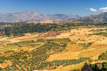 Sunny view of countryside fields near Ronda, Malaga province, Spain.