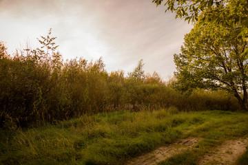autumn nature at sunset