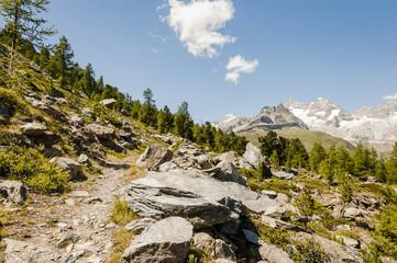 Zermatt, Wanderweg, Naturweg, Alpen, Wallis, Riffelalp, Lärchenwald, Findeln, Schweizer Berge, Sommer, Schweiz