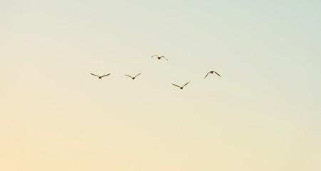 Birds flying in a blue sky