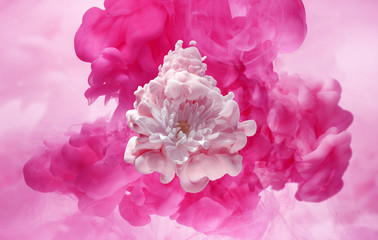 white flower in a cloud of pink ink