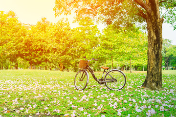 beautiful landscape image with Bicycle and flower on the floor for background