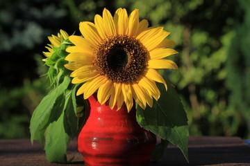 Sonnenblume in roter Vase