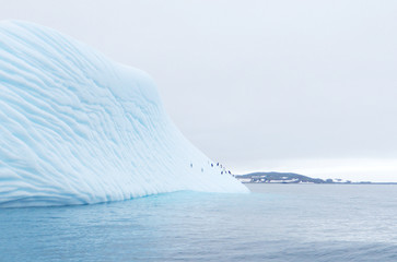 iceberg floating in antarctica with penguins