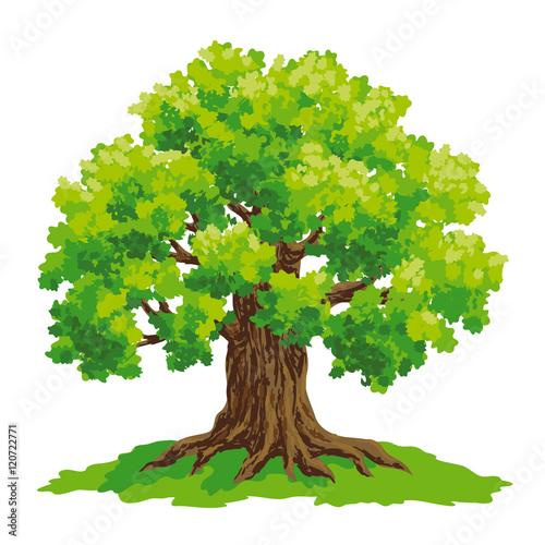 oak tree vector drawing stock image and royalty free vector files rh fotolia com vector oak tree silhouette vector oak tree silhouette