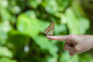 Beautiful butterfly resting on a womens finger