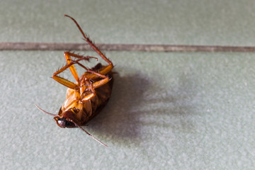 Dead cockroaches on floor.