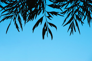 Silhouette of leaves over blue background