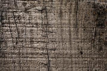 fondo de madera textura de tabla de madera - Madera Rustica