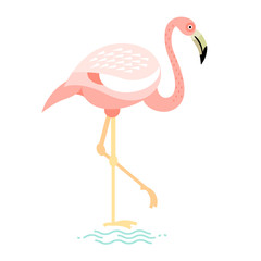 Vector illustration of bird flamingo.