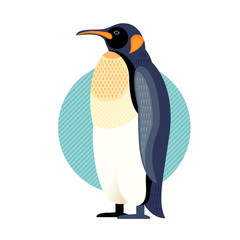 Vector illustration of bird penguin.