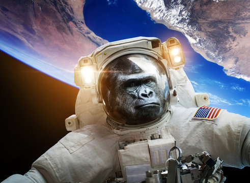 Astronaut Monkey gorilla in space. Elements of this image furnished by NASA.
