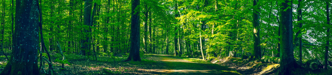 Forest in green colors in the spring