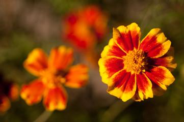 .flowers close up