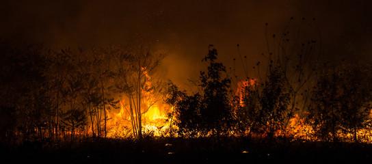 Пожар в лесу на поляне