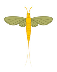 Mayfly Insect Illustration