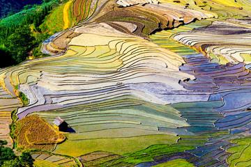 Fotobehang Rijstvelden Beautiful terraced rice fields in Vietnam